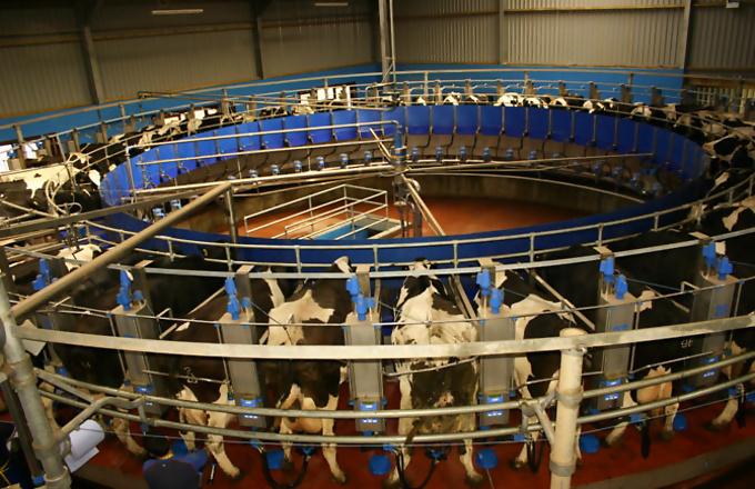 Аппарат для доения коров