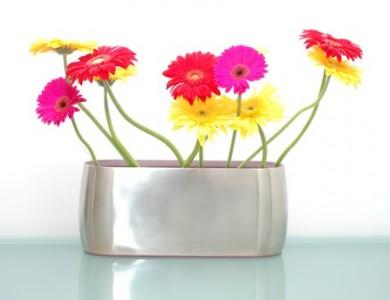 Герберы как цветы для бизнеса