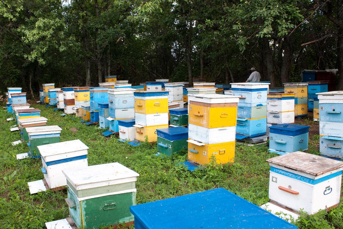Расположение пчелиных ульев
