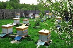 Пасека с пчелами