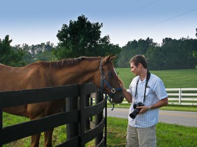 Разведение лошадей как бизнес