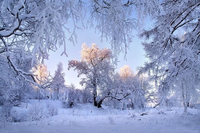 Чем заняться зимой бизнес