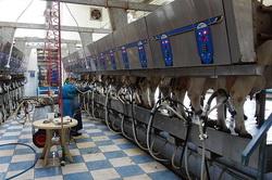Автоматическая дойка коров