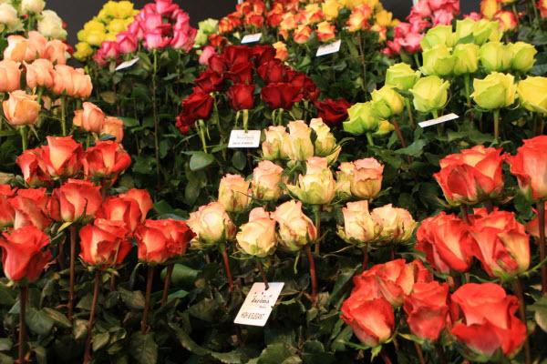 Цветочный бизнес в России