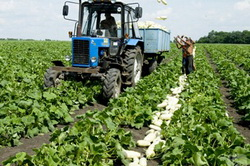 Фермерское хозяйство как бизнес