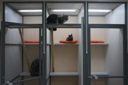 Мини-центр для кошек.
