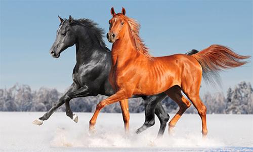 Бизнес на разведении лошадей