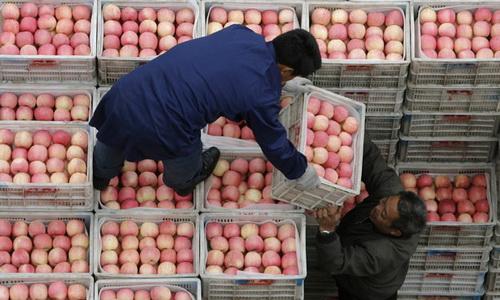 Оптовый бизнес на фруктах