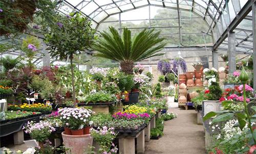 Питомник для растений