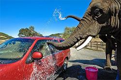 Слон-автомойка