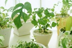 Выращивание комнатных цветов