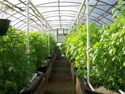 Выращивание овощных культур в теплице