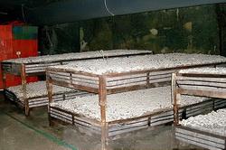 Выращивание шампиньонов в контейнерах