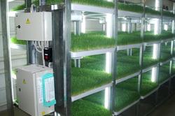 Многоярусная гидропонная установка для выращивания зеленого лука