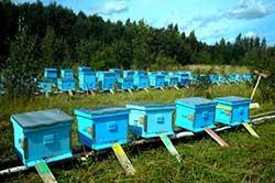 Пчелиная пасека