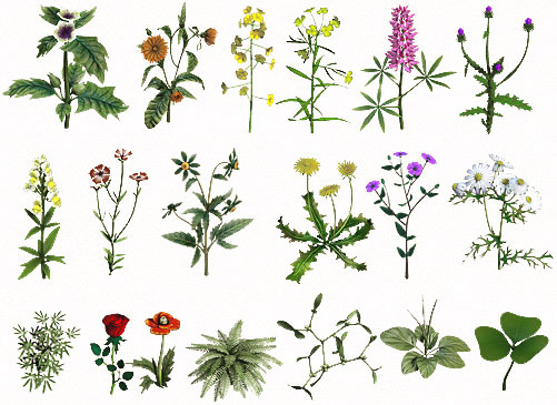 Виды лекарственных растений