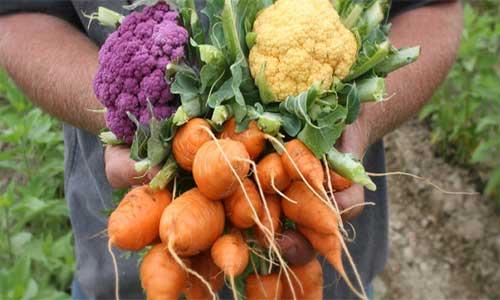 Выращивание овощей в деревне