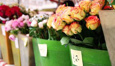 Купить цветы из цветочной теплицы в москв доставка цветов по рязани