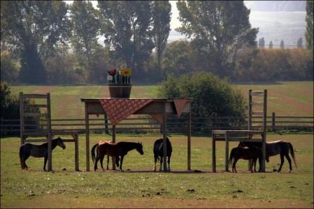 Бизнес - план на открытие конюшни