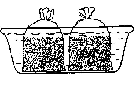 Споры вешенки или мицелий