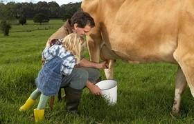 Горожане доят корову