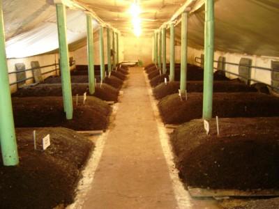 Вермикультивирование - разведение дождевых червей в искусственно созданных условия
