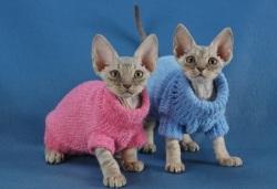 Создание одежды для кошек