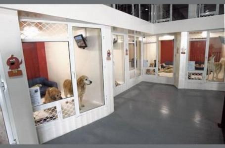 Отель для собак.