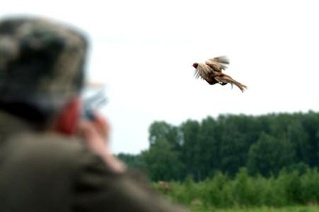 Бизнес: охота на фазанов
