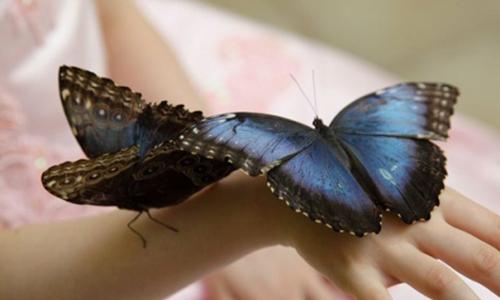 Бизнес на разведении бабочек