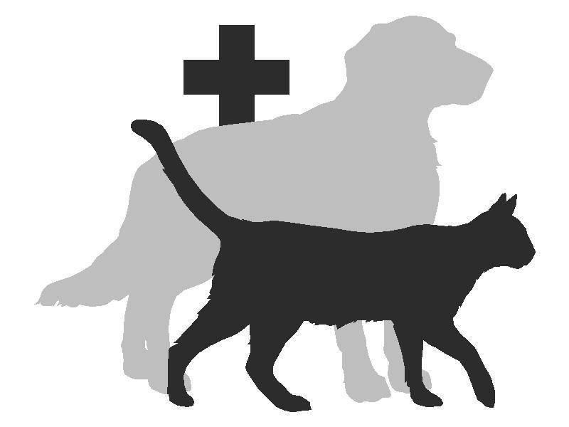 Ветеринарная аптека как бизнес