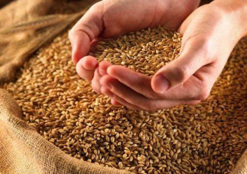 Обработанное зерно