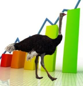 Бизнес, основанный на страусах
