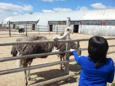Посещение туристами страусиной фермы