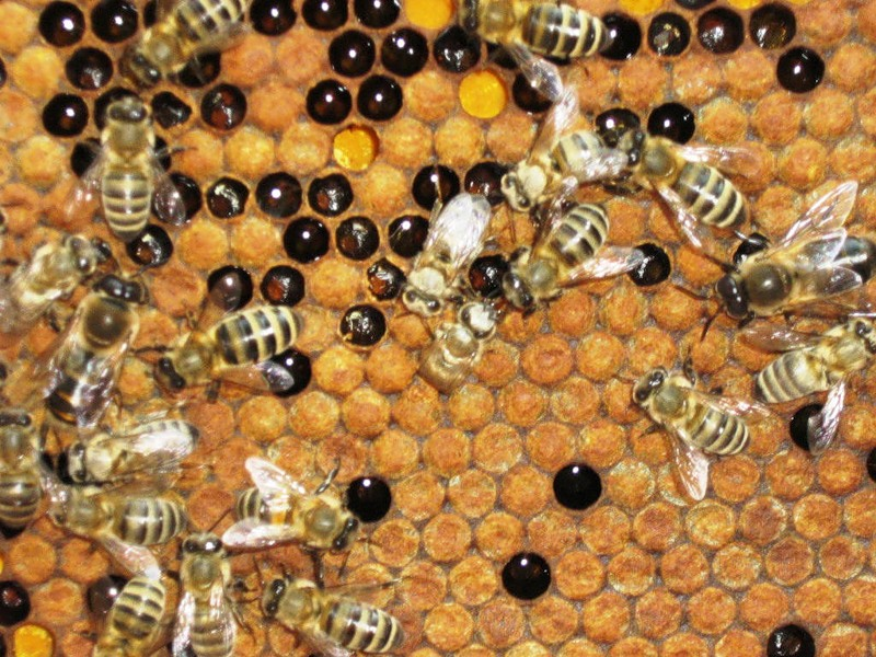 Изображение - Разведение пчел как бизнес biznes-pchely
