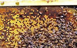 Изображение - Разведение пчел как бизнес pokupka-pchel
