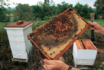 Изображение - Разведение пчел как бизнес soderjanie-pchel