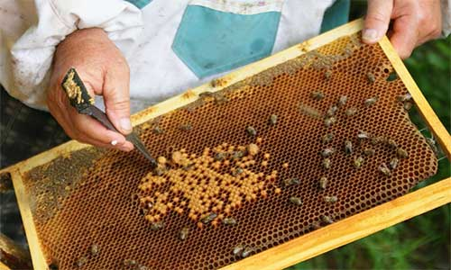 Бизнес планы в пчеловодстве бизнес идеи услуг