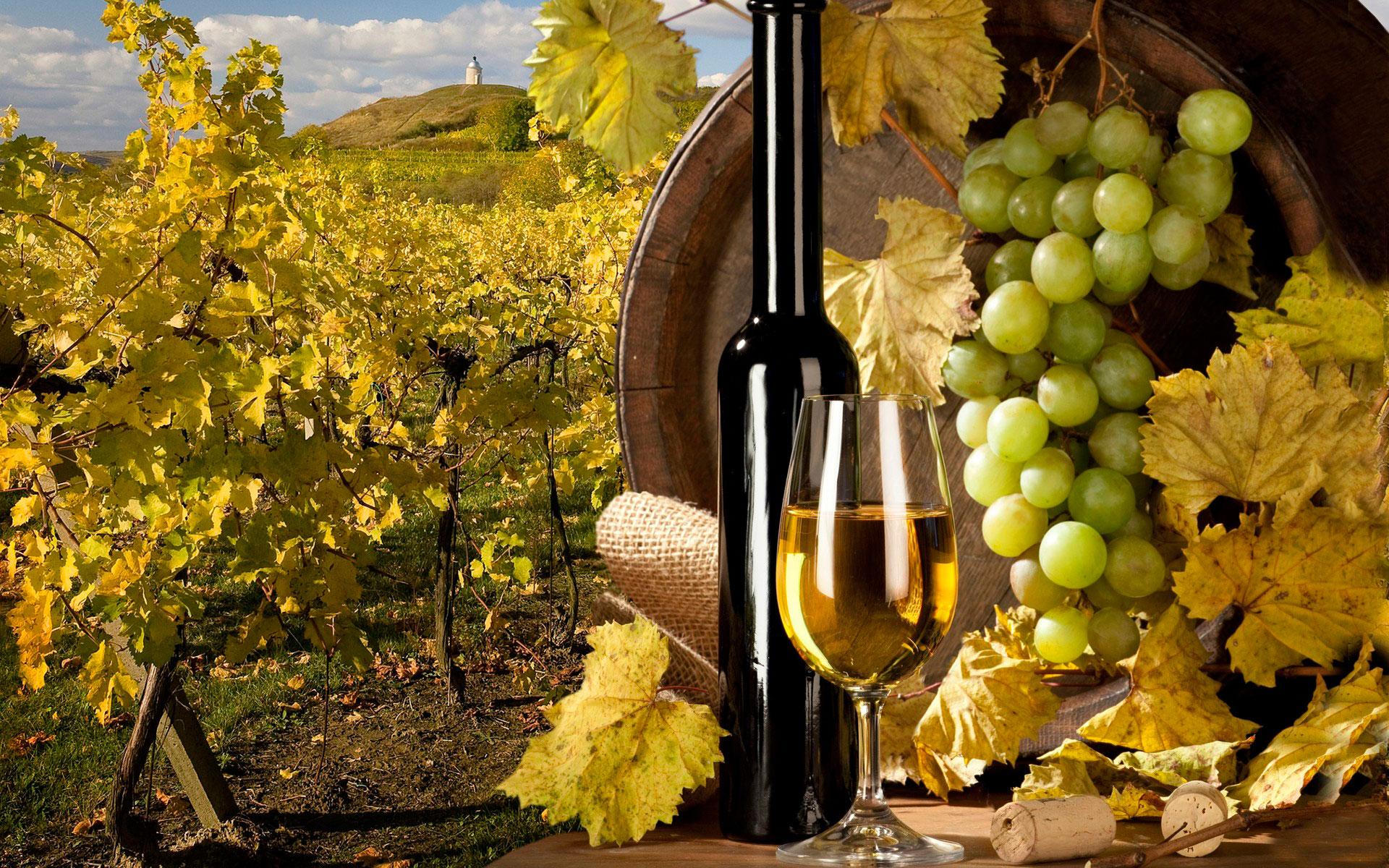 Бизнес на выращивании винограда