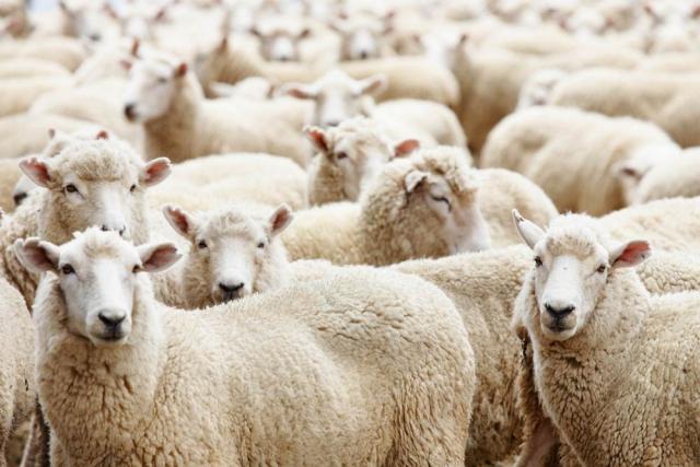 Бизнес идеи в животноводстве ашан бизнес план