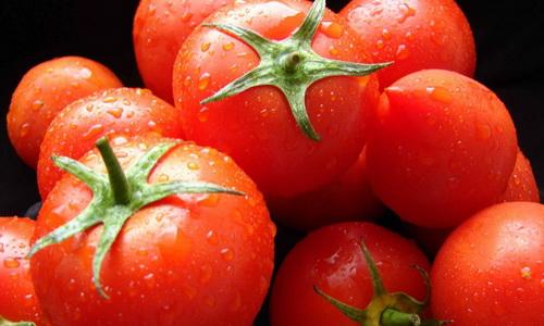 Бизнес на выращивании помидоров