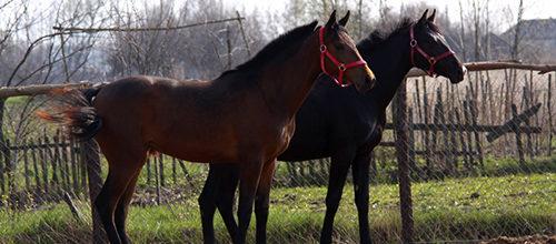 Содержание лошадей бизнес план бизнес план идеальная свадьба